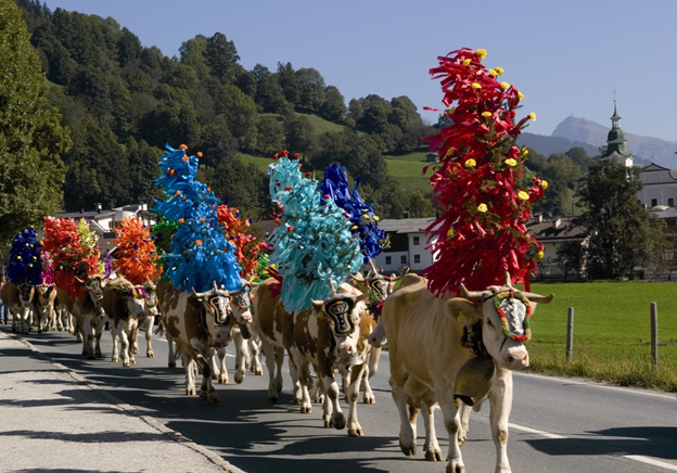 Almabtrieb: The Beautiful Cattle Procession